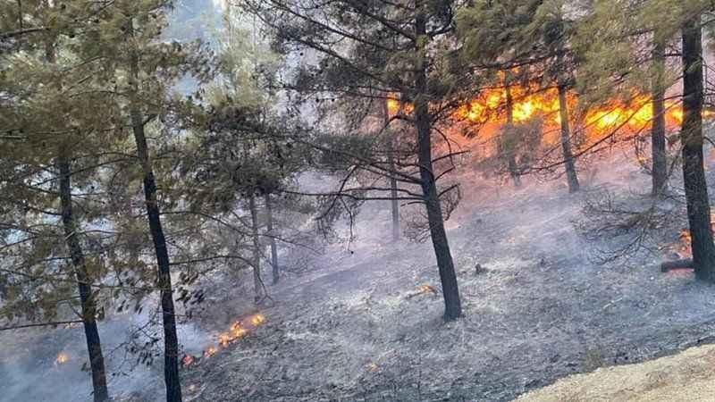 Muğla'da orman yangını! Ekipler müdahale ediyor
