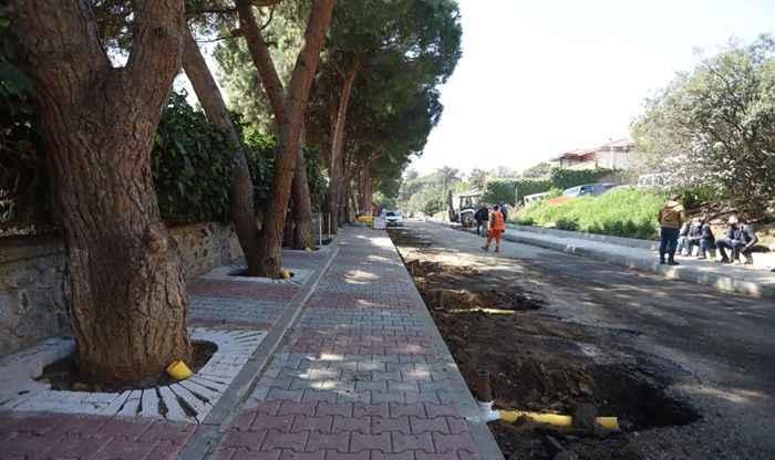 Kartal Belediyesi'nden yarım asırlık ağaçlara 'Nefes Borusu' projesi