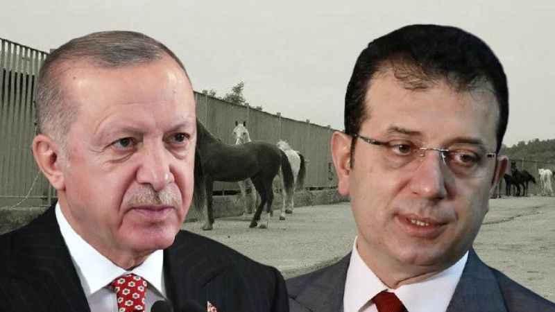Erdoğan'ın kayıp atlar çıkışına cevap: Tarım Bakanı açıklama yapsana