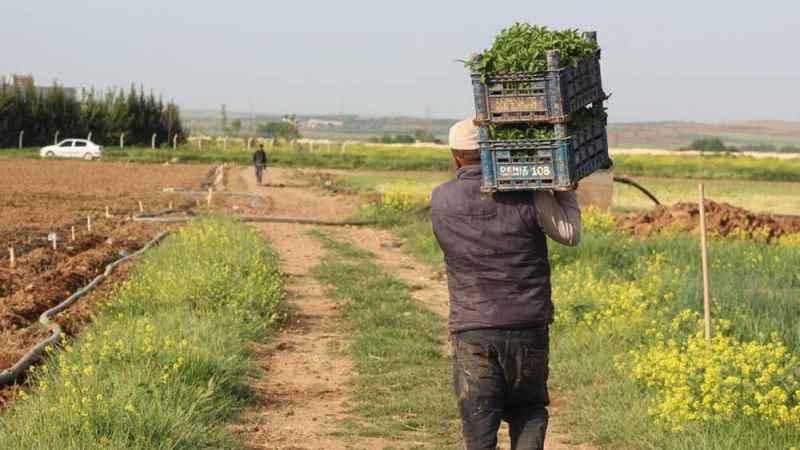 Hükümet icralık çiftçiyi gözden çıkardı!