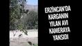 Erzincan'da karganın yılan avı kameraya yansıdı