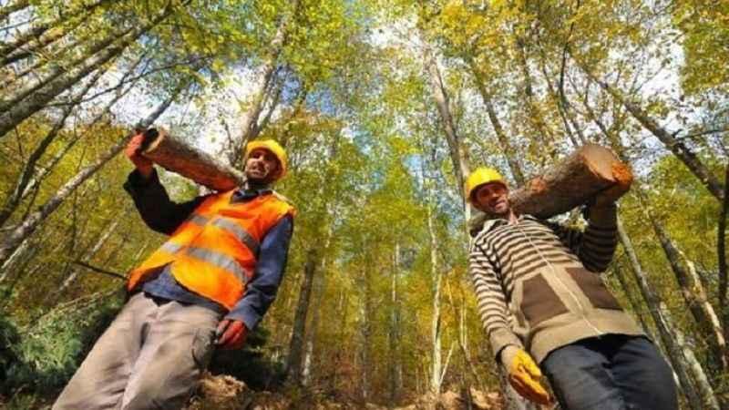 Orman Genel Müdürlüğü 2080 geçici işçi alımı yapacak