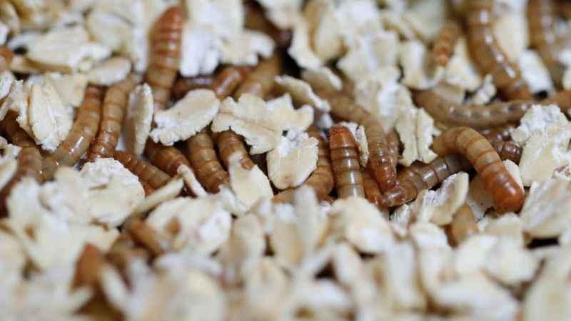 """AFAD'ın iklim değişikliği raporu: """"Böcek istilası...."""""""