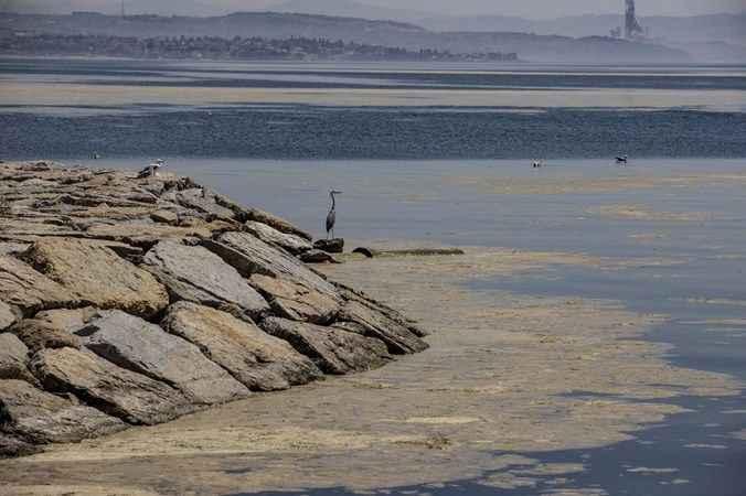 Denizlerimizde büyük tehlike! Deniz salyası canlıları öldürüyor...