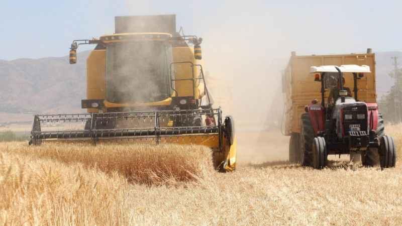 Kuraklık buğdayı da vurdu, rekolte yüzde 70 düştü!