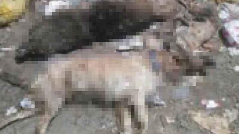 Çanakkale'de 30'a yakın kedi ve köpek zehirlenerek öldü!