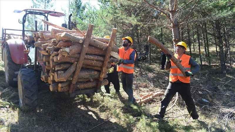 """Orman işçileri """"şehitlik"""" haklarından yararlanmak istiyor"""