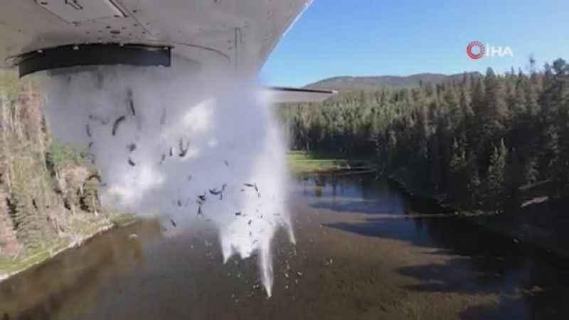 Göllere havadan binlerce balık böyle bırakıldı