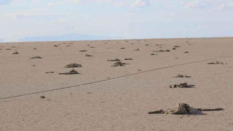 Binlerce yavru flamingonun öldüğü Tuz Gölü'nde neler oluyor?