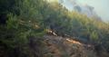 Bir orman yangını da Mersin'de