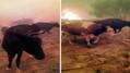 Yangından hayvanlarını kurtarmaya çalışan vatandaşın çaresizliği