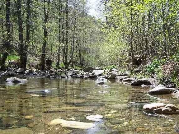 Balıkesir'de ormanlara giriş 3 ay yasaklandı