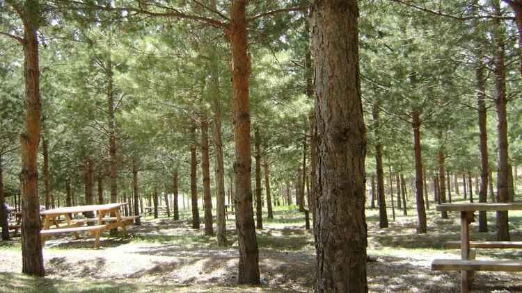 Erzincan'da ormanlık alanlara girişler 15 Eylül'e kadar yasaklandı