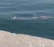 Sara hastası vatandaş vapurda kriz geçirip denize düştü!