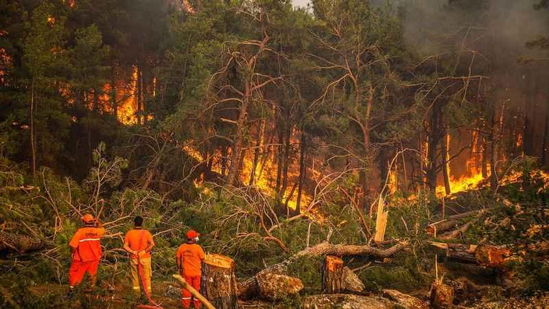 """""""Çakmak çaksalar yakalıyoruz"""" demişti; ülkede orman kalmadı!"""