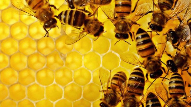 İtalya'da 30 milyon bal arısı yangınlarla yok oldu
