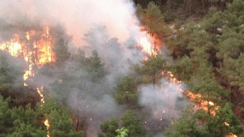 Tokat'ta çıkan orman yangını söndürüldü