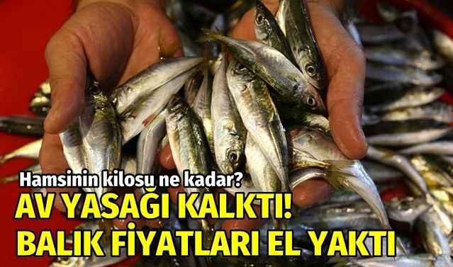 Av yasağı kalktı, balık fiyatlarında son durum! İşte balık fiyatları
