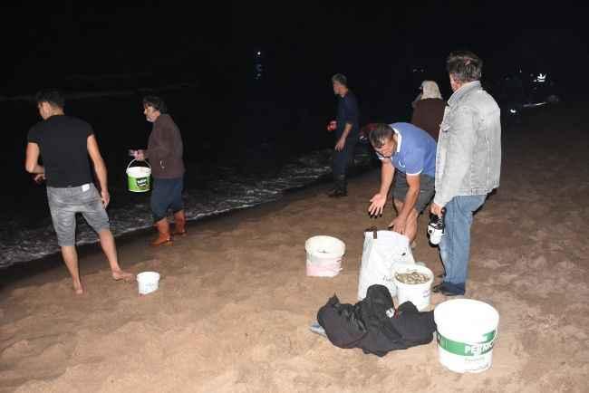Binlerce istavrit kıyıya vurdu, kovasını kapan koştu geldi