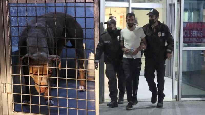 Polis ve gece bekçisi pitbull saldırısına uğradı