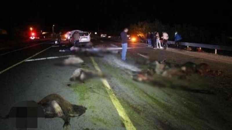Polatlı'da otomobil çarpması sonucu 23 koyun telef oldu
