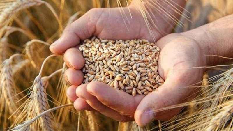 TMO'dan 4 ayda 800 milyon dolarlık arpa buğday ithalatı!