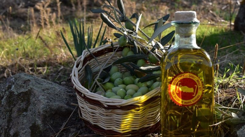 Aydın Memecik zeytinyağının Avrupa serüveni başlıyor