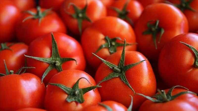 Rus denetçi: Türkiye'den gelen domateslerden virüs çıktı!