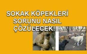 SOKAK KÖPEKLERİ SORUNU NASIL ÇÖZÜLECEK!!!!