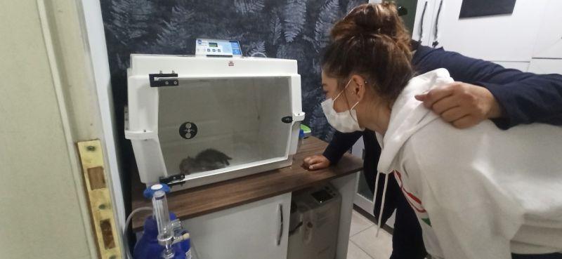 Yavru tilkinin tedavisini gözyaşları ile izlediler