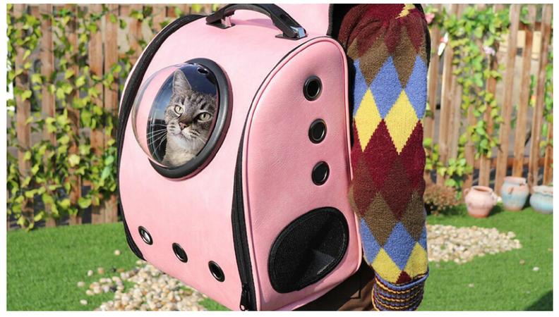 Kedi Ürünleri (Mama/Su Kabı, Taşıma Çantası, Tırmalama Tahtası) Alırken Nelere Dikkat Edilmeli?