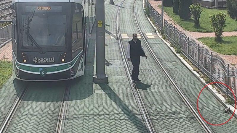 Tramvay yolunda mahsur kalan kaplumbağanın yardımına vatman koştu