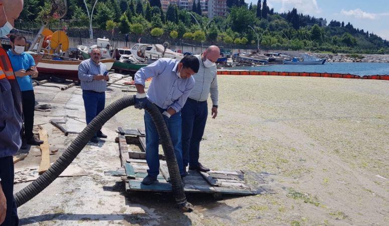 Düzce Belediyesi Marmara Denizi'nde musilaj temizliği yaptı