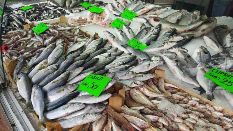 Tezgahtaki en pahalı balık Çinekop oldu