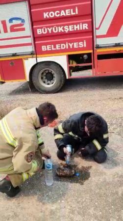 Yangının ortasında kalan kaplumbağayı kurtardılar