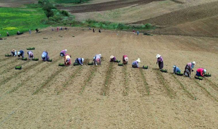 Tarım teşviklerinden 160 kadın faydalandı