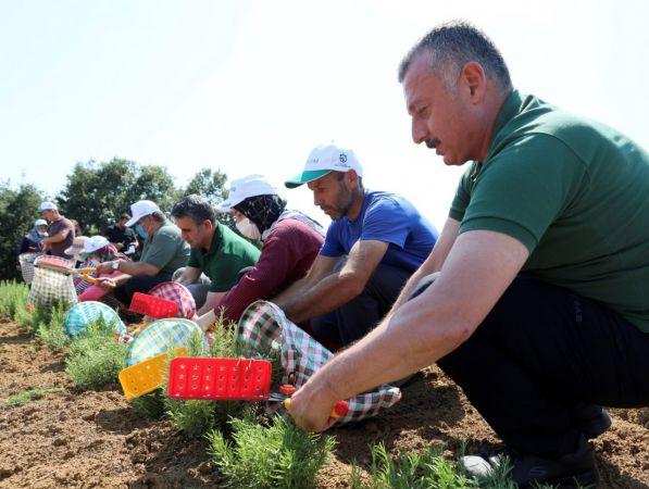 Kocaeli'de çiftçilerin yeni umudunda ilk hasat yapıldı
