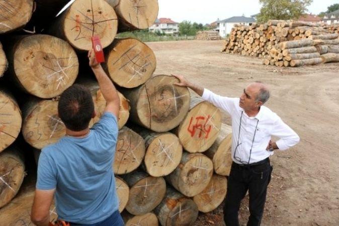 Düzce'de 457 bin metreküp odun üretildi