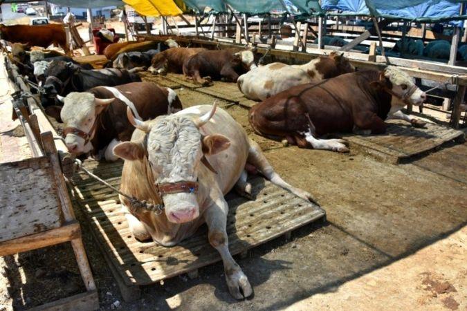 Düzce'den 3.6 milyon hayvan gönderildi