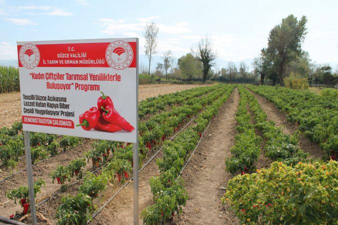Düzce'de 1 milyon 494 bin dekar tarım arazisi bulunuyor
