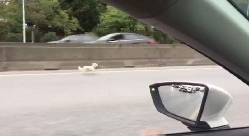 Kaçan köpek, trafiği birbirine kattı