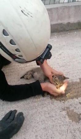 Kalbi duran kediyi hayata döndürmek için zamanla yarıştı