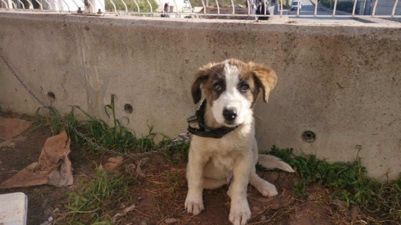 Sokakta bulduğu yavru köpeği sahiplendi