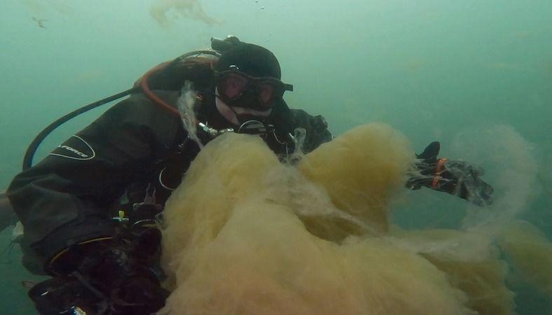 """İzmit Körfezi'nde dibe çöken """"deniz salyası"""" su altında görüntülendi"""