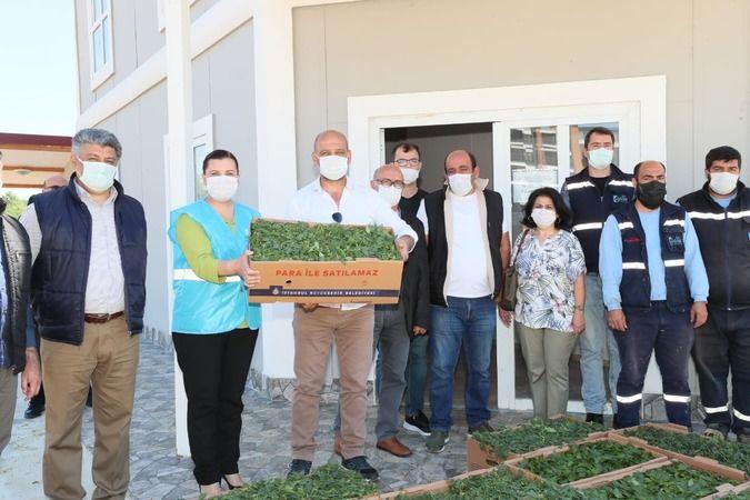 Fide desteği İzmit'le sınırlı kalmıyor Hürriyet Kocaelili çiftçilere fide desteği veriyor