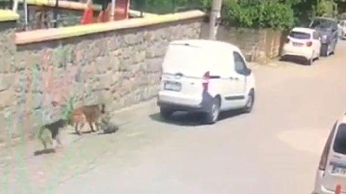 Sokak köpeğini ezen şahsa ceza kesildi!