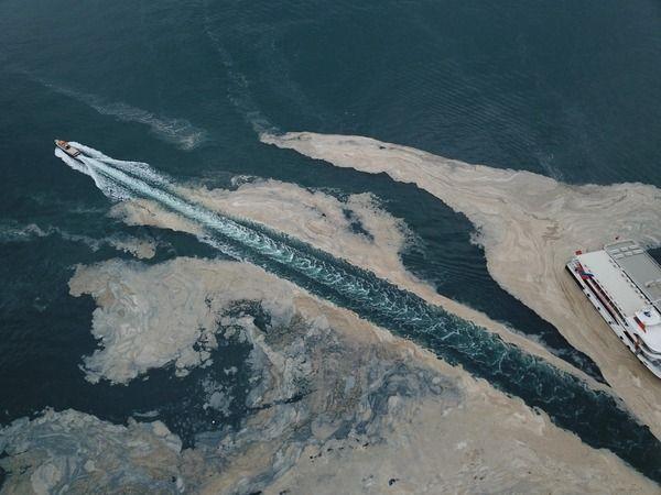 İzmit Körfezi'nde temizlik sonrası yine müsilaj - son dakika kocaeli  haberleri