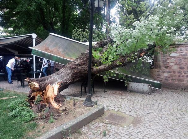 Çay bahçesinde korku dolu anlar… Şiddetli rüzgar ağacı devirdi!