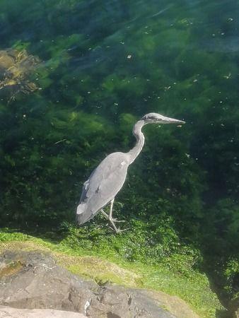 Okul bahçesine giren Balıkçılı doğal ortamına kavuşturdu