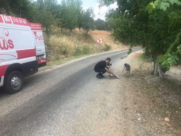 Patibüs, yangın bölgelerindecan dostlarımızın yaralarını sarıyor